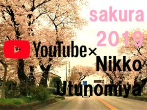 youtube宇都宮の桜